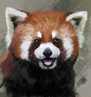 Red panda by Muns11