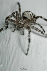 Spiderdude2