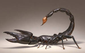 Scorpion rework
