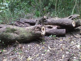 Logs by throw-elijah