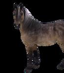 horse 2/3 body