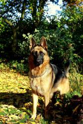 Doggie in the garden by Makkialientje
