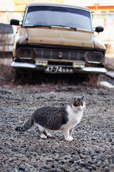 Cat and Moskvich by moukee