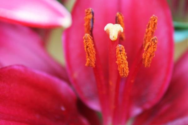 Lily2.