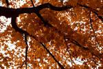 Autumn3.