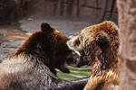 Bears2.