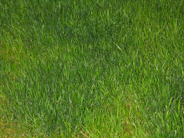 grass by the-alyshleigh-stock