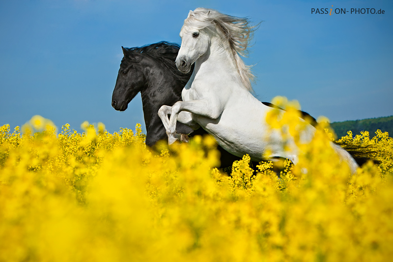 Pegasus! by PASSiON--PHOTO