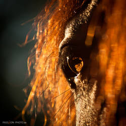 fire by PASSiON--PHOTO