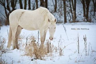 winter day by PASSiON--PHOTO