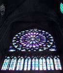 Rose of Notre Dame