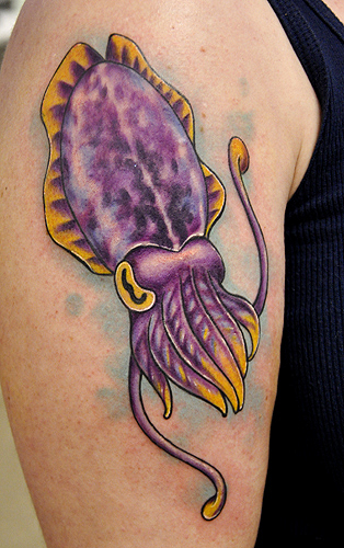 Cuttlefish by amyjiao