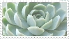 Succulent by Yellouu