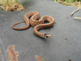 yard snake stock 2 by stormymay888