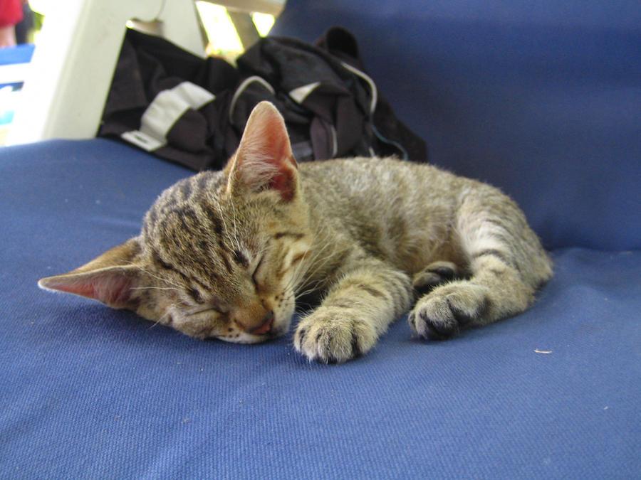 Sweet dreams, kitty by ApocalypsEJP13
