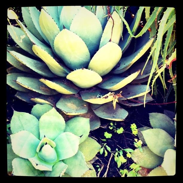 Aloe By Oochameleonoo On Deviantart