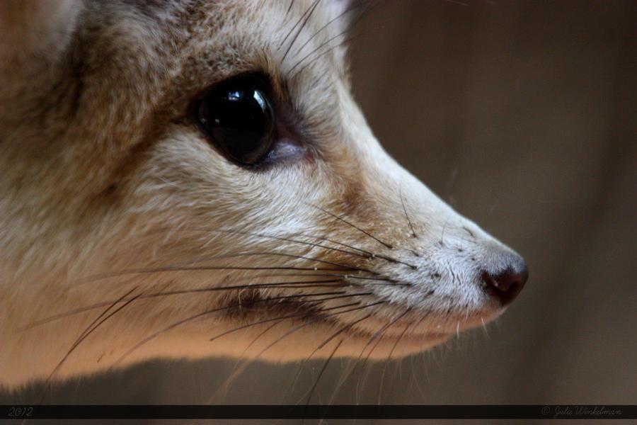 Fennec fox 3 by canisography on deviantart - Pagina da colorare fennec fox ...