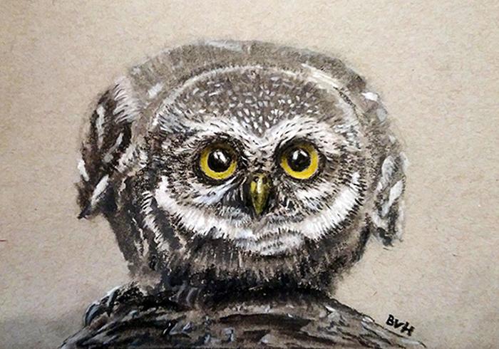 Little Owl by Brian-van-Hunsel