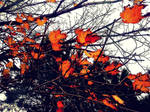 Bright Leaves by JayLPhotography