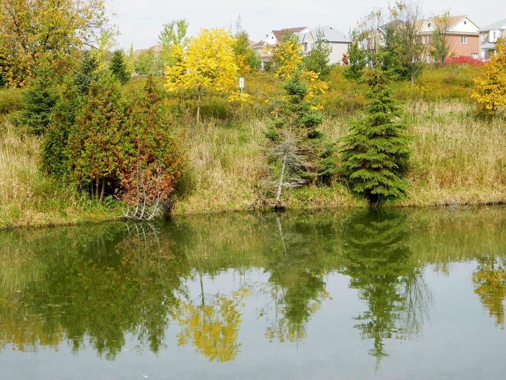 Reflection by JayLPhotography