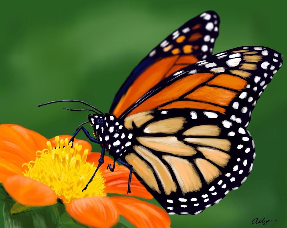 Monarch butterfly  by Adlaya