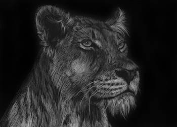 Lioness by Adlaya