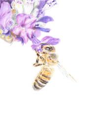 Honey Bee by Adlaya