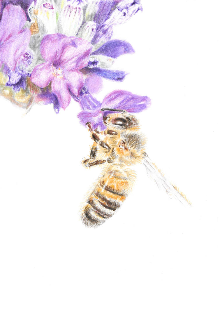 Honey Bee by Adlaya