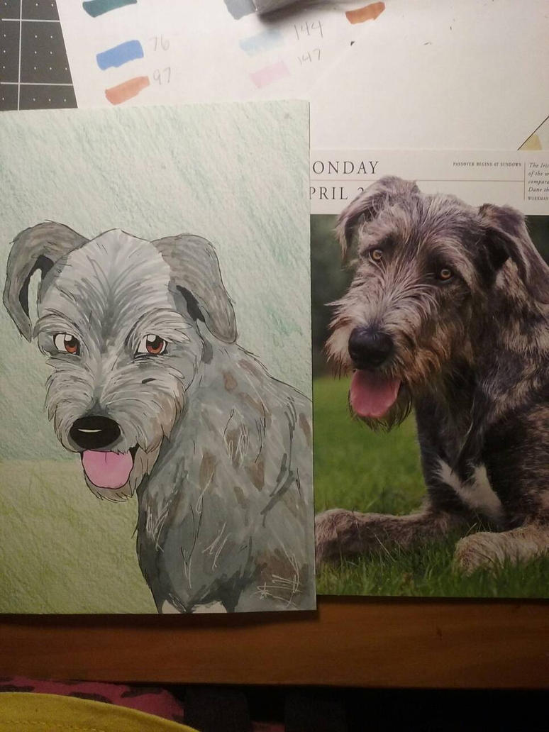 Irish wolfhound  by AkiraSuzumiya