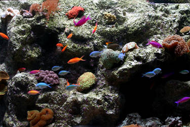 Colorful Fish by unessential