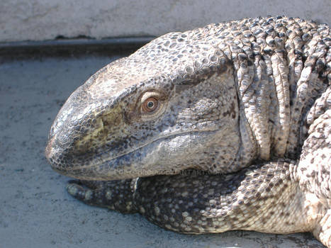 sexy lizard lady