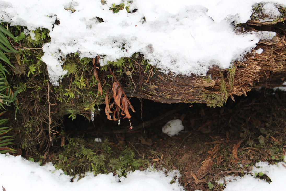winter burrow stock by Unseenivy253