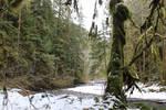 winter creek stock by UnseenIvy