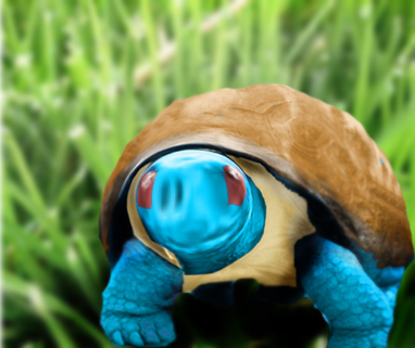 Real life squirtle by jonnymeister1 on deviantART