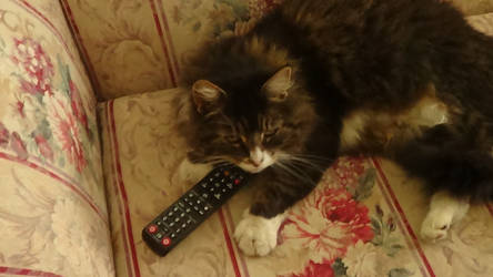 Cat Holds Remote by n0-username