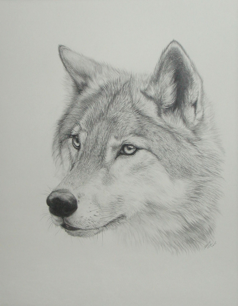 Wolf Drawing. by PaNdAz333 on DeviantArt