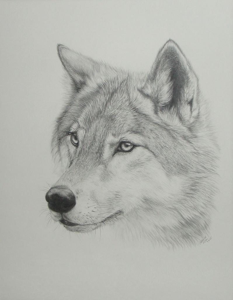 Art drawings animals 2009 2015 pandaz333 a wolf s head xdd i think i