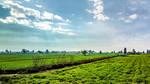 Fields I