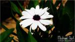 White Flower II
