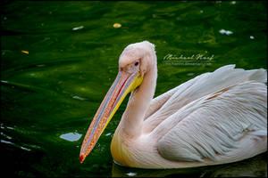 Pelican IV by MichaelNN