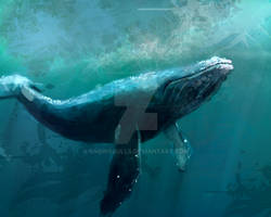 whale speedpaint