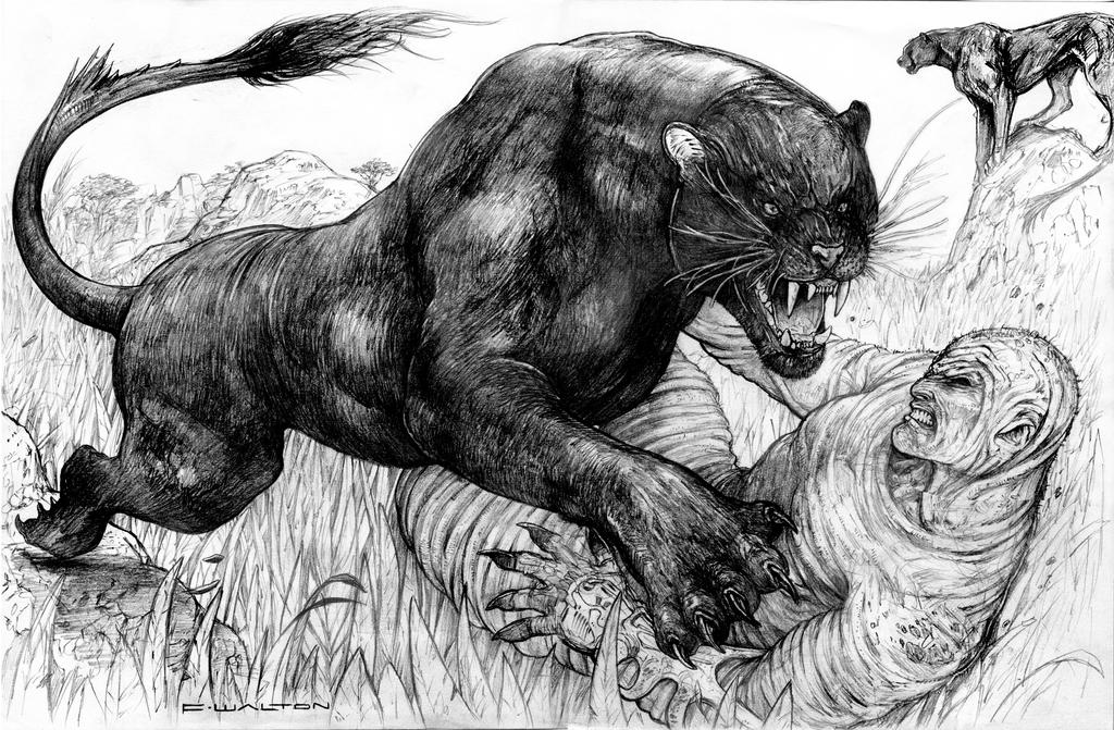 how to draw a bear spread hedge