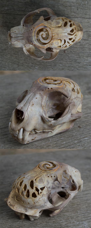 Carved Bobcat Skull by Samishii-Kami