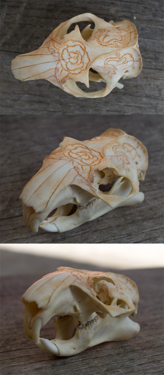 Woodchuck Skull Carving by Samishii-Kami