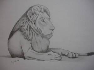 Alert lion gaze