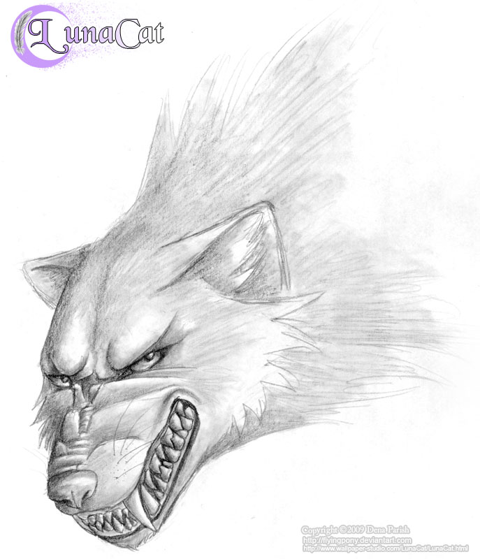 mad wolf drawings - photo #4
