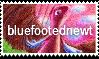 Artist Stamp: bluefootednewt by Endorell-Taelos