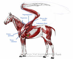 Pegasus Physiology 2 by algy
