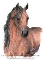 CP Horse by algy