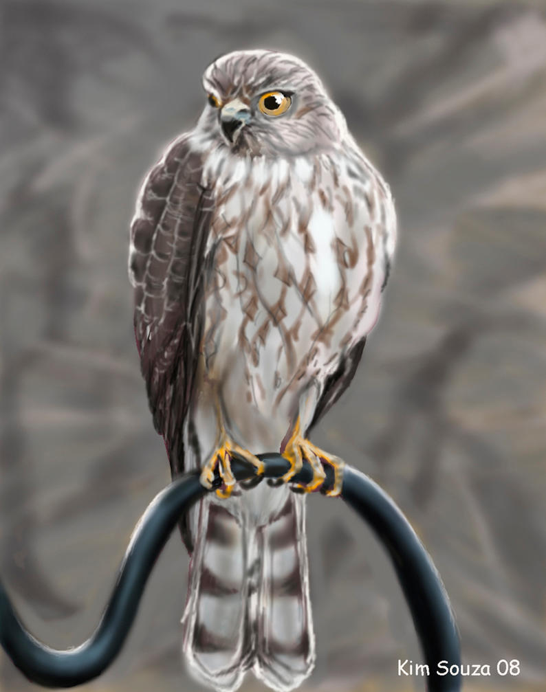 Hawk by SquidVango